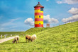 Leinwanddruck Bild - Sheep in front of the Pilsum lighthouse on the North Sea coast of Germany.