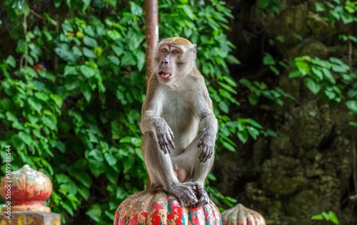 Aluminium Aap Monkey sits atop the stairs at the Batu Caves
