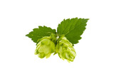 hop bunch on white background - 170031186