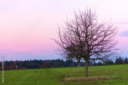 Fotobehang Purper Purple sunset