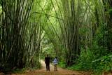 Bambu ormanında bir gün