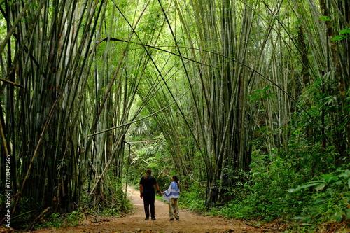 Fotobehang Bamboe Bambu ormanında bir gün