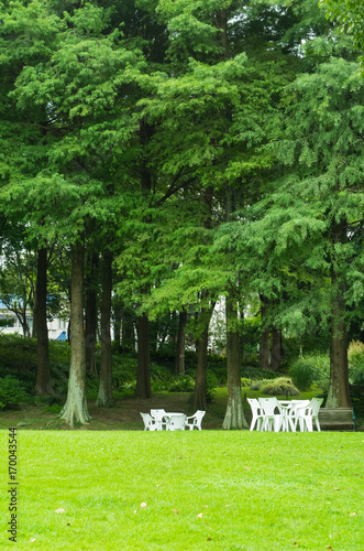 Fotobehang Lime groen テーブルセットのある風景