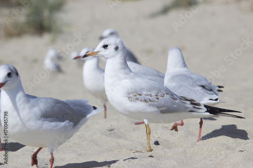 a flock of white birds on the beach Poster