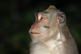 Portrait of the monkey - 170046130