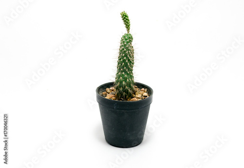 Foto op Canvas Cactus Cactus in pot on a white background