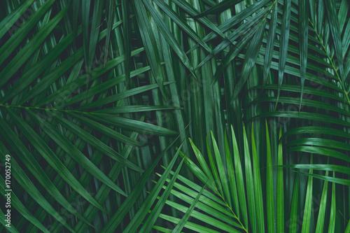 liść kokosa