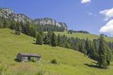 Tanneralm im Benediktenwandgebiet - 170061901