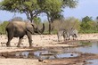 Typical African Waterhole Scene with an elephant and zebra, Hwange, Zimbabwe