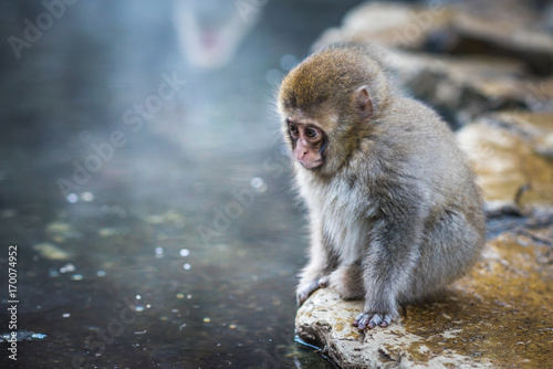 Aluminium Aap Snow monkey or Japanese Macaque in hot spring onsen