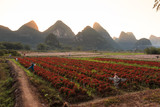 Landscape of Yangshuo. farm with scarecrows and Karst mountains. Located near Yangshuo County, Guilin City, Guangxi Province, China.
