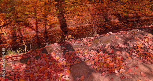 Fotobehang Herfst Stream in the red autumn forest.