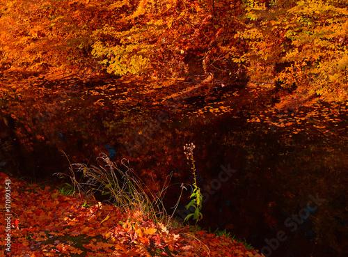 Fotobehang Rood traf. Little river red autumn forest.