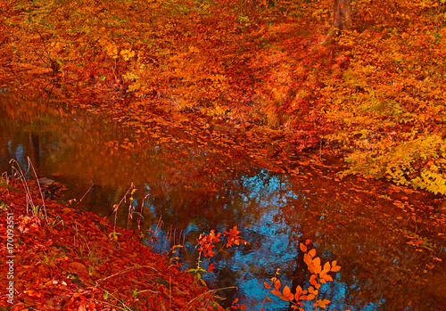 Fotobehang Rood traf. Little river red autumn forest.