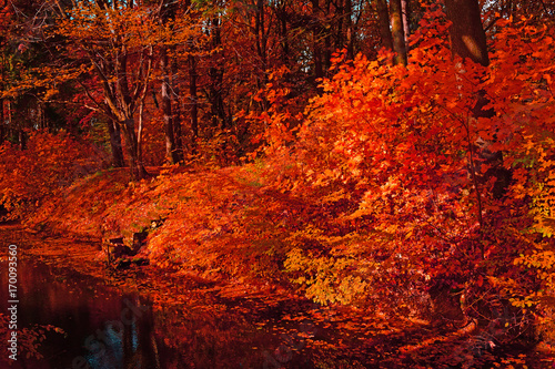 Foto op Canvas Rood traf. The red river of the dark forest in autumn.