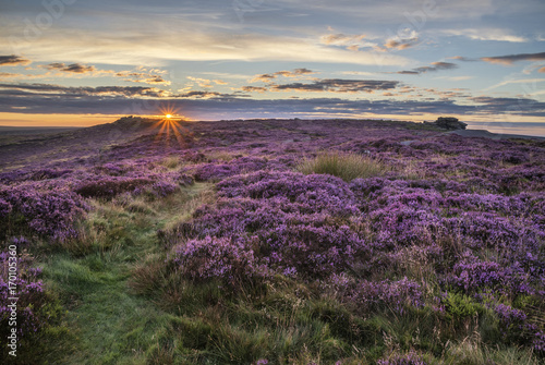 Foto op Plexiglas Beige Stunning dawn sunrise landscape image of heather on Higger Tor in Summer in Peak District England
