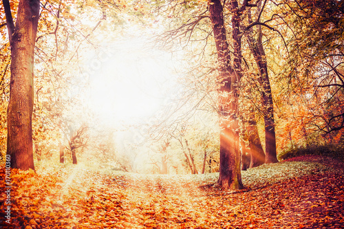 Beautiful autumn park with fallen leaves, fall foliage and sunbeams , outdoor nature