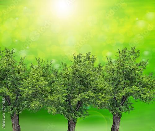Fotobehang Lime groen naturaleza verde