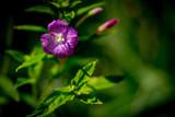 Letnie kwiaty na tajemniczej łące