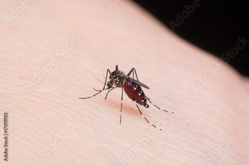 Close-up mosquito sucking blood - 170119103