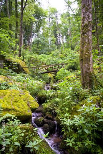 Fotobehang Lime groen Gaishöll-Wasserfälle - Sasbachwalden - Schwarzwald