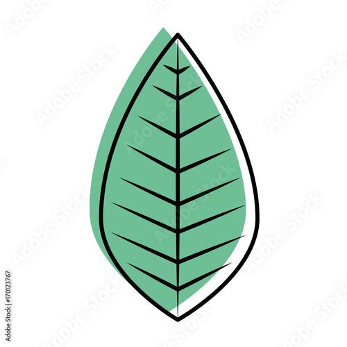 leaf icon over white background vector illustration