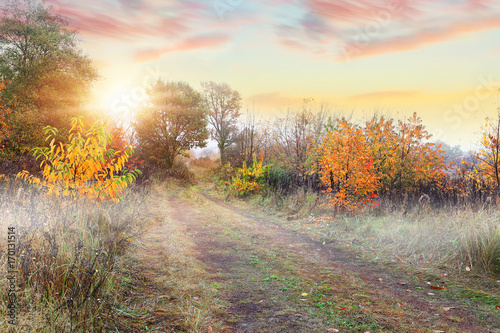 Misty autumn glade in the morning