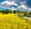 canvas print picture - Field of rapeseed, canola or colza with rural road