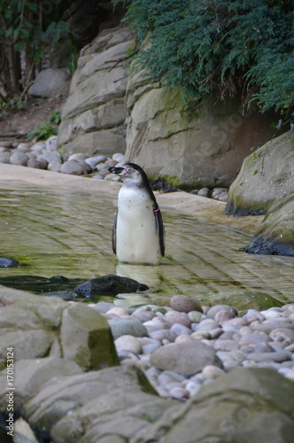 Fotobehang Pinguin penguin