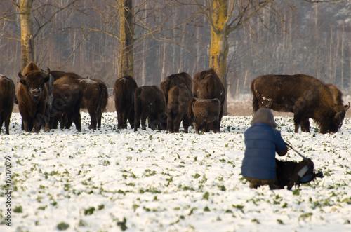 Fotobehang Bison Polowanie na Żubra