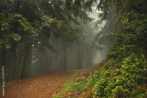 Fotobehang Diepbruine Trail in a dark pine forest on the slopes of the mountain. Carpathians, Europe. Beauty world.
