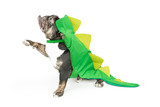 Dog wearing dinosaur Halloween costume, facing side while holding paw up for you to place your product under. Isolated on white.