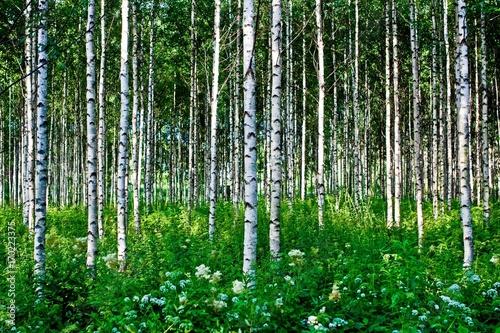 Aluminium Berkenbos birch grove