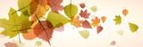 Vector banner dead leaves, autumn background - 170231587