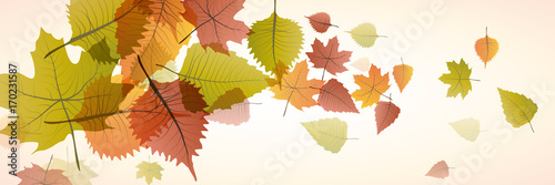 Vector banner dead leaves, autumn background