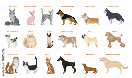 Dogs and cats set.
