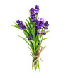 Bunch of lavender flowers isolated on a white