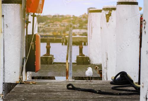 Wharf at balmain, Sydney Australia Poster