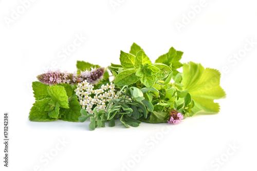 Fresh green herbs isolated