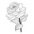 Rose cartoon style on white background