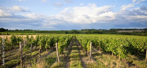 Papiers peints Bleu ciel Vignoble de France