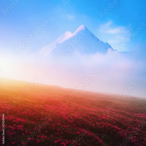 Foto op Plexiglas Blauwe hemel Blooming rhododendron in the high mountains