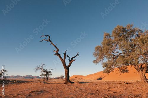 In de dag Oranje eclat Namibia desert, Veld, Namib