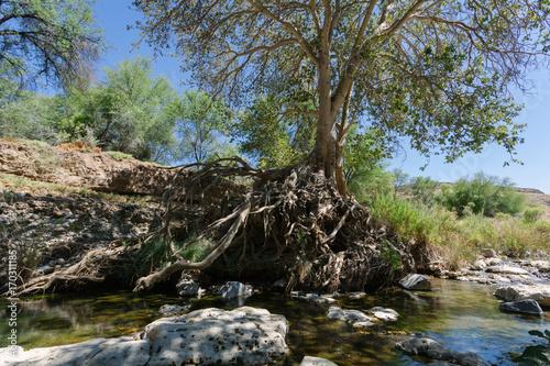 Papiers peints Rivière de la forêt River in the Namibia desert .
