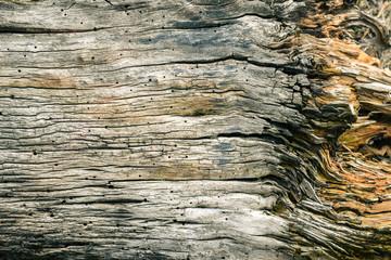 Feine Risse und Struktur von natürlich gealtertem Holz eines Baumes