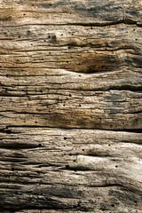 Schöne Struktur von natürlich gealtertem Holz eines Baumes mit Rissen