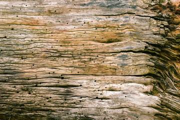 Altes Holz mit Rissen und Löchern natürlich gealtert