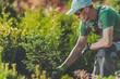 Gardener Planting New Trees