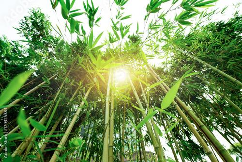 Fotobehang Bamboe Bamboo grove, bamboo forest at Arashiyama, Kyoto, Japan