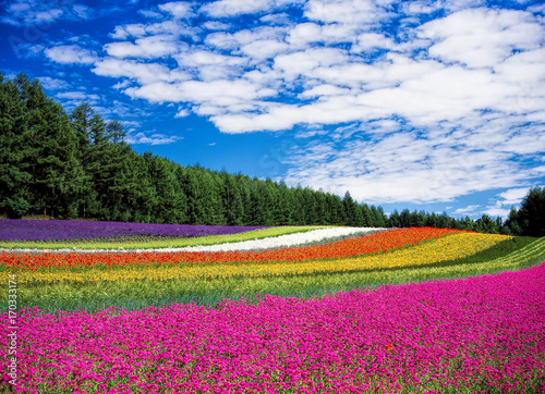 Fotobehang Tulpen Colorful tulip field